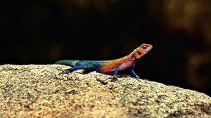 Preview wallpaper reptile, lizard, rock, macro