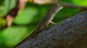 Preview wallpaper reptile, lizard, tree