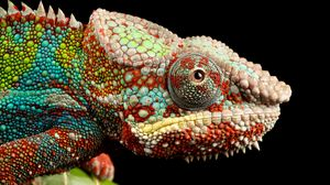 Preview wallpaper reptile, look, chameleon