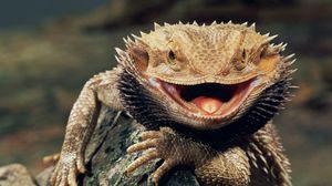 Preview wallpaper reptile, swollen, teeth, anger