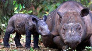Preview wallpaper rhino, baby, grass, care