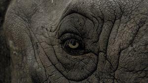 Preview wallpaper rhino, eye, wrinkles