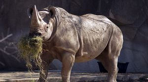 Preview wallpaper rhino, grass, nature reserve, large