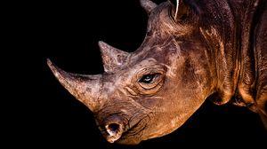 Preview wallpaper rhino, head, shadow, profile