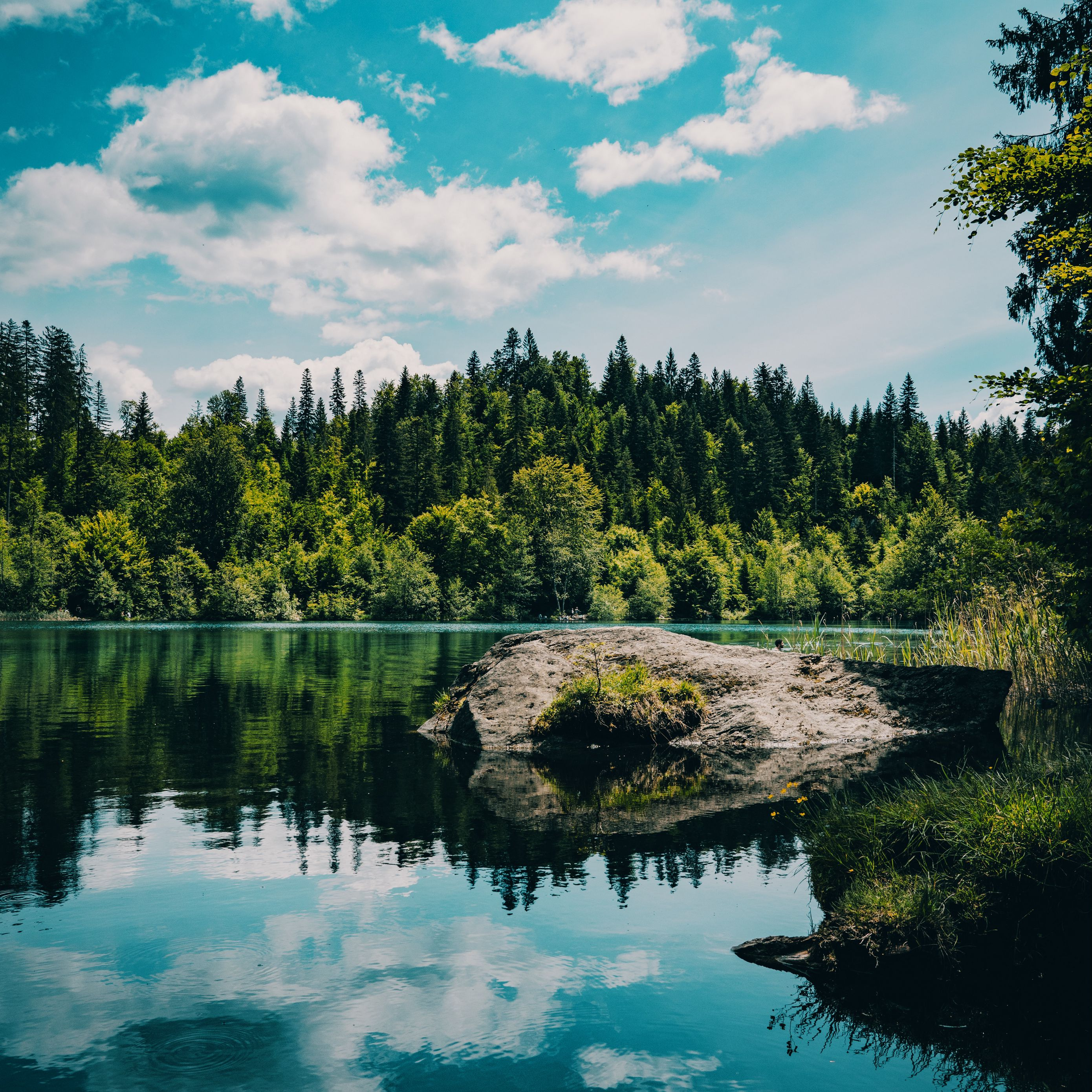 2780x2780 Wallpaper river, forest, trees, stone, grass