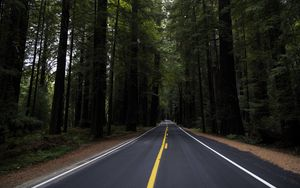 Preview wallpaper road, marking, forest, trees, landscape