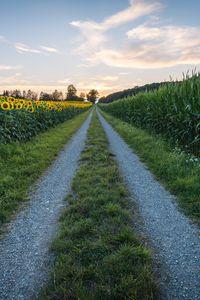 Preview wallpaper road, sunflower, grass, distance