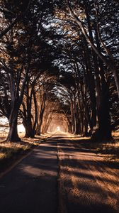 Preview wallpaper road, trees, shadow
