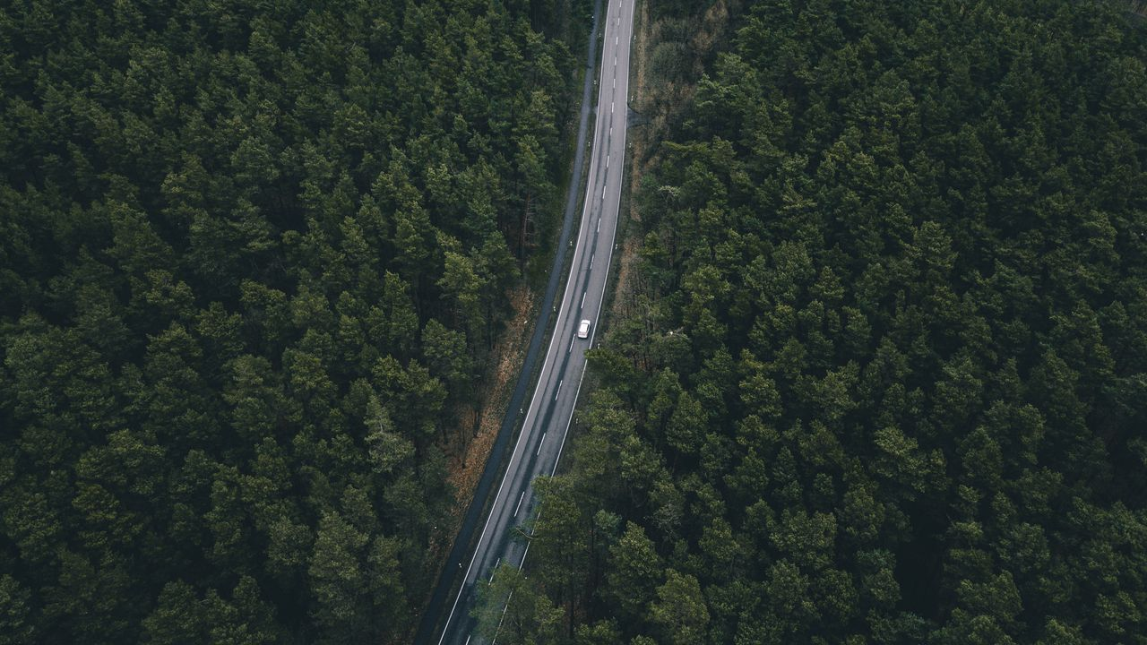 Wallpaper road, trees, top view