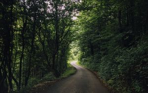 Preview wallpaper road, turn, trees, forest, nature, landscape