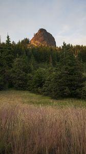 Preview wallpaper rock, peak, trees, forest, nature, landscape