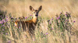 Preview wallpaper roe deer, young, wildlife, looks, animal