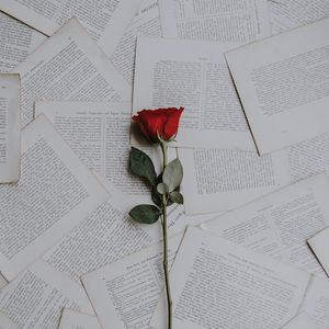 Preview wallpaper rose, books, texts