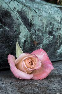 Preview wallpaper rose, flower, petals, stone, aesthetics