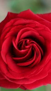 Preview wallpaper rose, petals, flower, macro, red