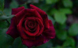 Preview wallpaper rose, petals, red, bud, flower