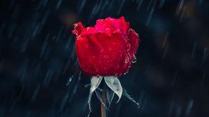 Preview wallpaper rose, rain, drops, moisture, red