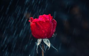 Preview wallpaper rose, red, bud, drops, rain, moisture