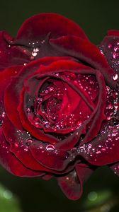Preview wallpaper rose, red, drops, macro