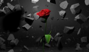 Preview wallpaper rose, stones, fragments, flower, red