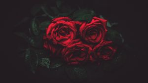 Preview wallpaper roses, drops, buds, dark background
