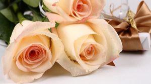 Preview wallpaper roses, flowers, bouquet, drops, fresh, gift, surprise
