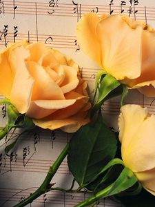 Preview wallpaper roses, flowers, buds, three, notes, music