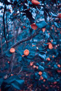 Preview wallpaper roses, garden, bush, tree, blur