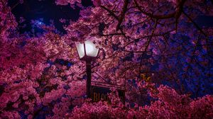 Preview wallpaper sakura, blossoms, lantern, night, spring