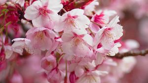 Preview wallpaper sakura, flowering, branch, flowers, blur