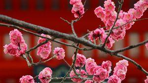 Preview wallpaper sakura, flowers, bloom, pink, blur