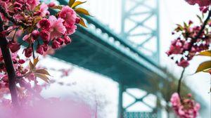 Preview wallpaper sakura, flowers, pink, bridge, spring