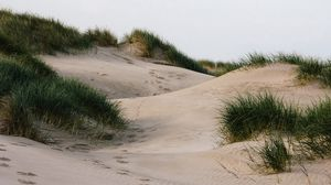 Preview wallpaper sand, grass, traces