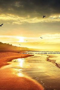 Preview wallpaper sea, beach, nature, birds, light