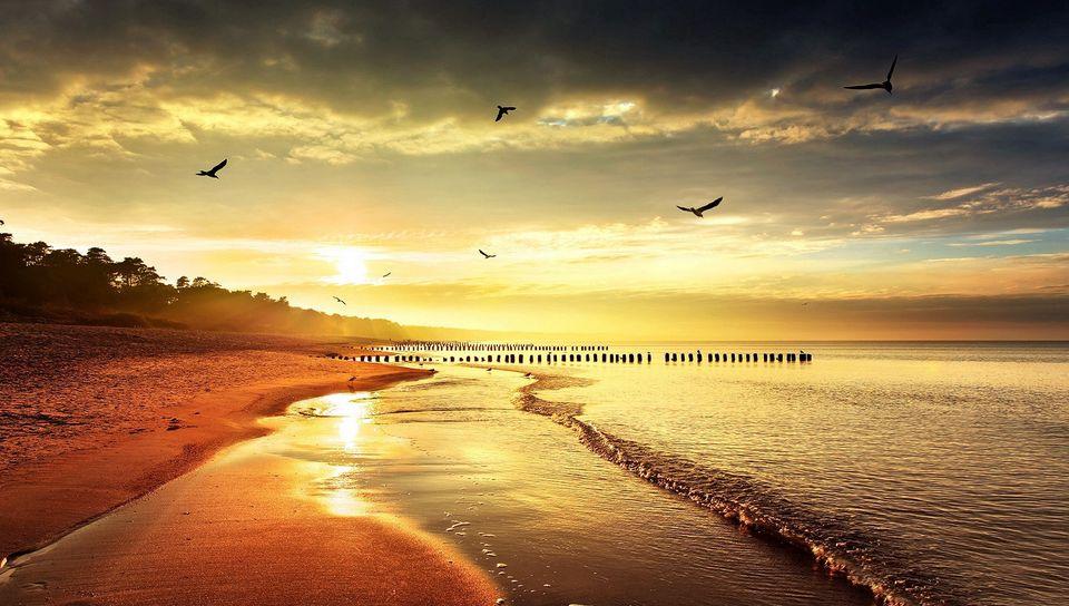 960x544 Wallpaper sea, beach, nature, birds, light