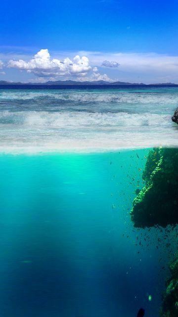 360x640 Wallpaper sea, coast, rocks, underwater world, vegetation, fish