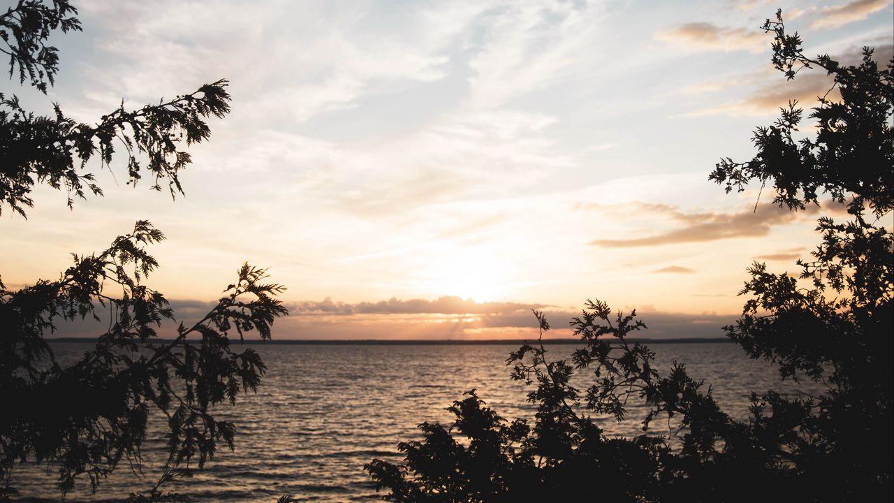 【壁纸桌面】大海,地平线,树枝,日落,天空高清壁纸免费下载