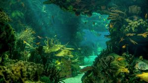 Preview wallpaper sea, seabed, landscape