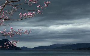 Preview wallpaper sea, sky, tree, landscape