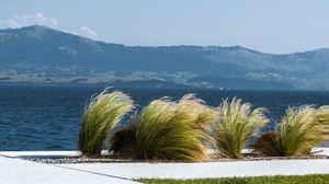 Preview wallpaper sea, wind, plants