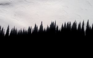 Preview wallpaper shadow, trees, wall, texture