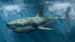 Preview wallpaper shark, predator, sea, underwater, art