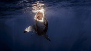 Preview wallpaper shark, sea, under water, teeth