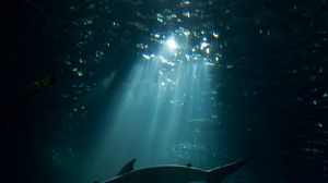 Preview wallpaper shark, underwater world, dark