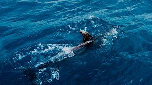 Preview wallpaper shark, water, predator