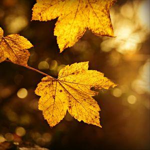 Preview wallpaper sheet, autumn, branch, blur