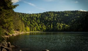 Preview wallpaper shore, forest, trees, lake, nature