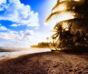 Preview wallpaper shore, tree, palm, sea, sunset