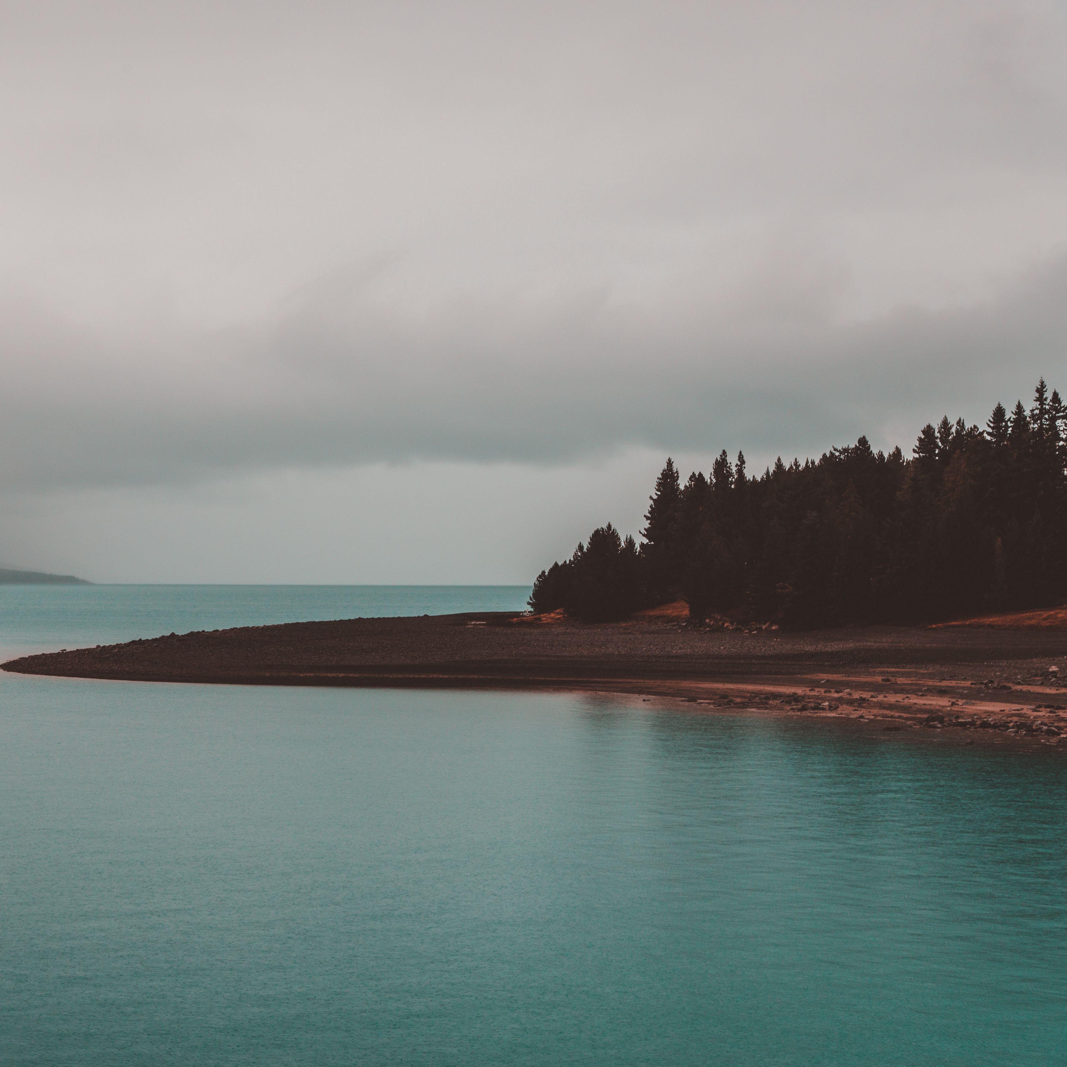 3415x3415 Wallpaper shore, trees, sea