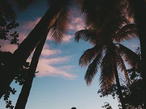 Preview wallpaper silhouette, palm trees, sunset, dusk, tropics, sea